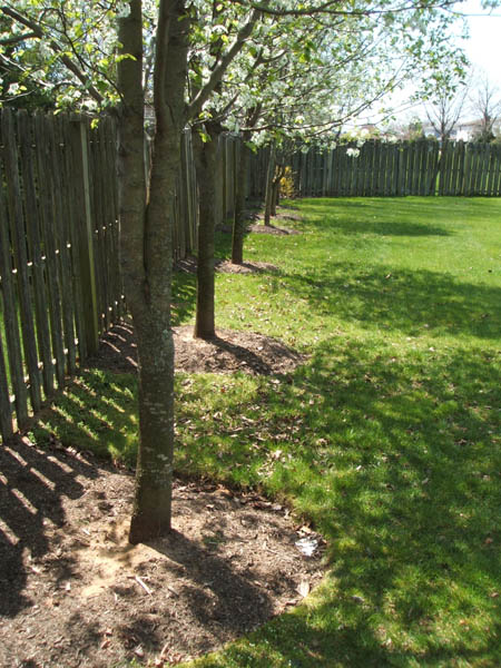 Shade Tree Landscaping Image