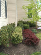 Landscaping Picture